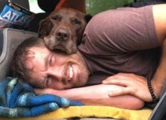 Hombre hizo muy feliz a su perra con cáncer en sus últimos meses de vida