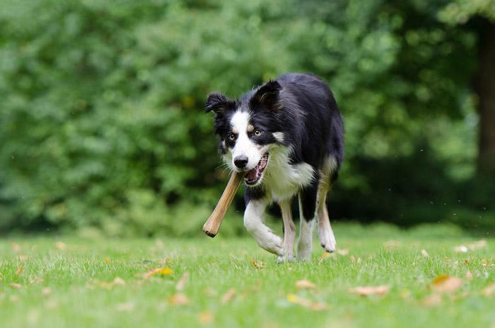 Huesos para perros