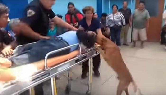 Los dos perros intentaban lamer el rostro de su padre humano