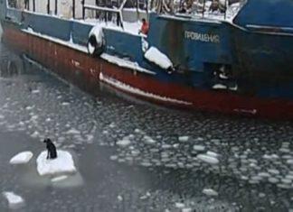 Marineros rusos rescatan a un perro atrapado en un iceberg