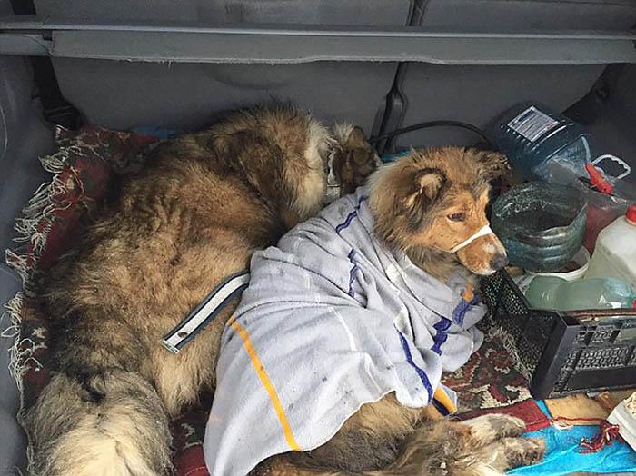Panda y Lucy en el maletero del auto