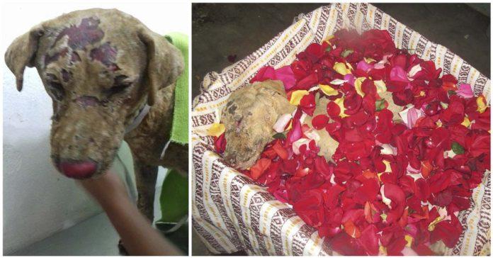Perra dio su vida para salvar a sus cachorros de un incendio