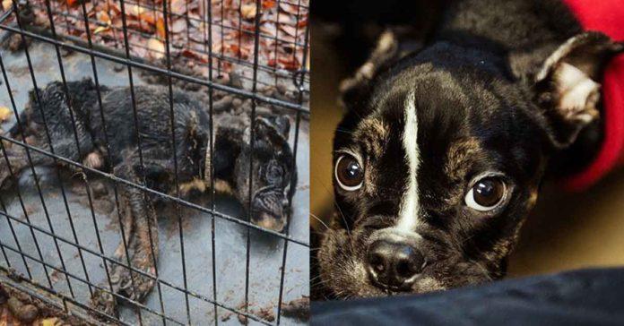 Perra fue encerrada en una jaula estuvo a punto de morir de hambre