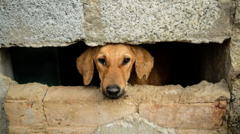 Perro al cuidado de Rakesh