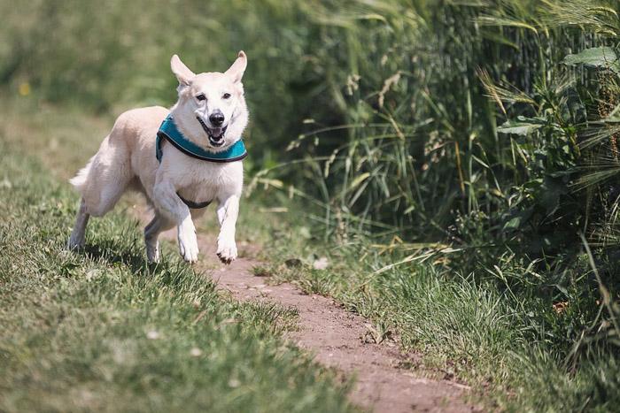 Perro persigue su cola