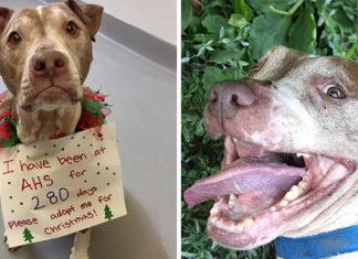 Perro deseaba encontrar un hogar en esta navidad y fue adoptado