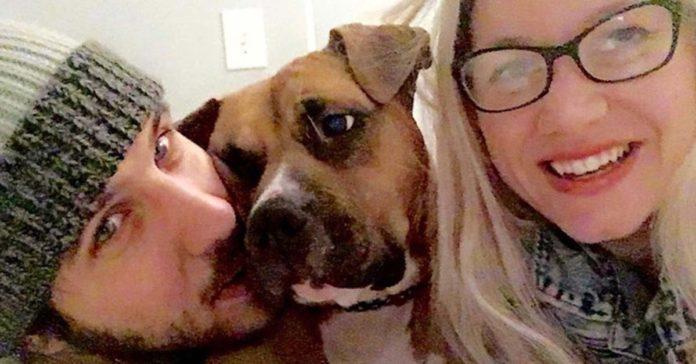 Perro evitó un robo en su hogar de acogida y lo adoptaron para siempre