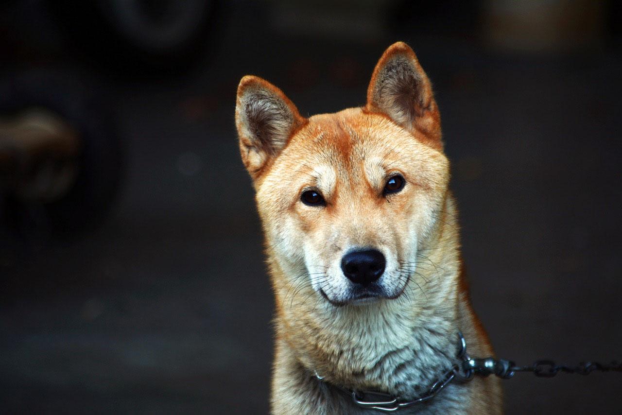 Perro sin familia