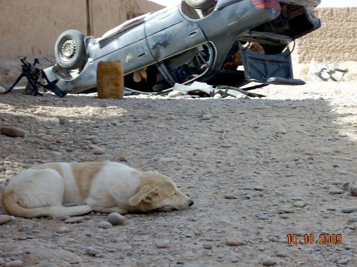 Perro sin hogar en Afganistán.