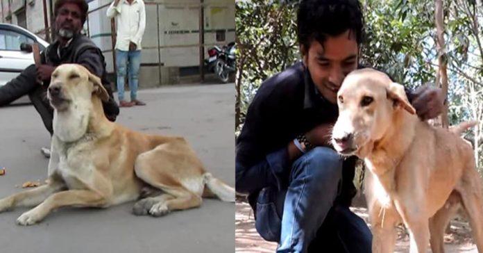 Perro tenía un absceso gigante en su cuello, pero ahora se encuentra bien