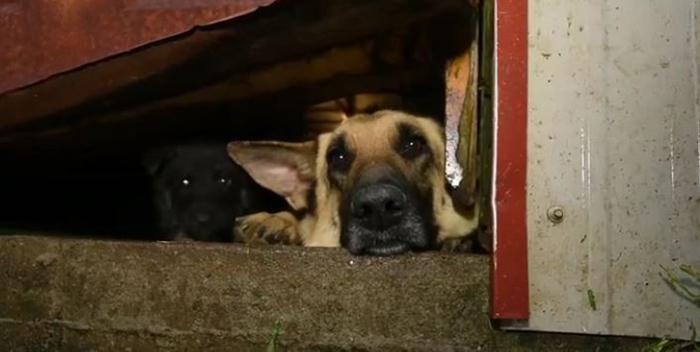 Perros de la granja de cachorros