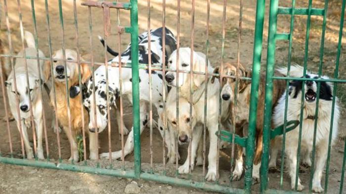 Perros del santuario