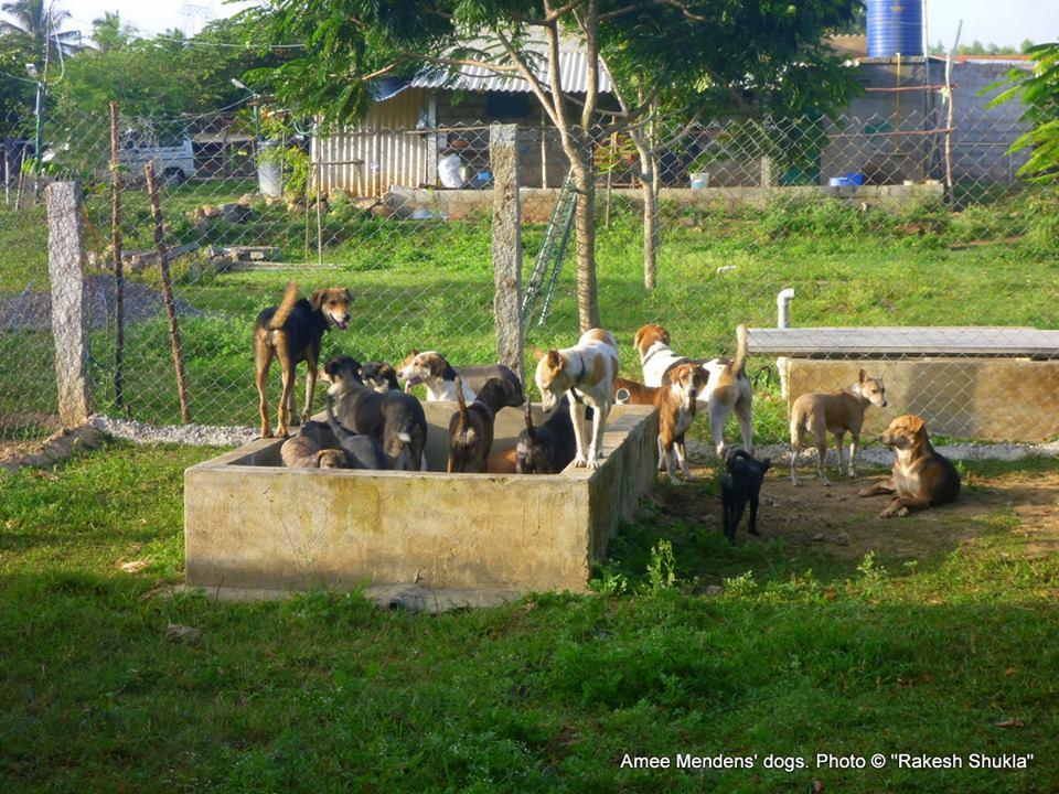 Perros en el santuario