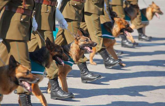 Perros policiales