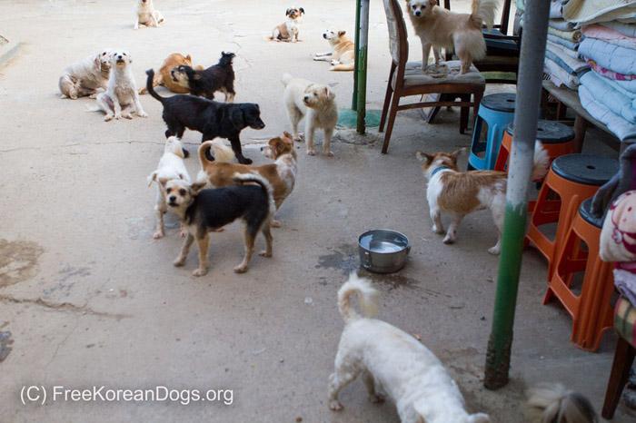 Perros rescatados en Corea del Sur