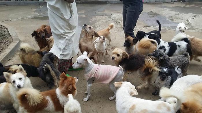 Perros sin hogar rescatados en Corea del Sur