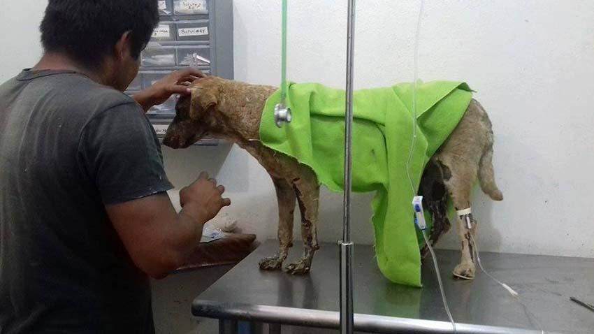 Pétalo en el veterinario