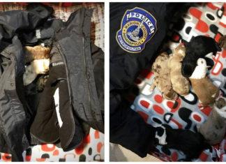 Policía rescató siete cachorros a punto de congelarse