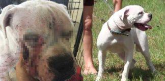 Policías rescataron a un perro sin hogar que se encontraba muy mal