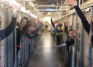 Refugio animal está celebrando que todos los perros fueron adoptados