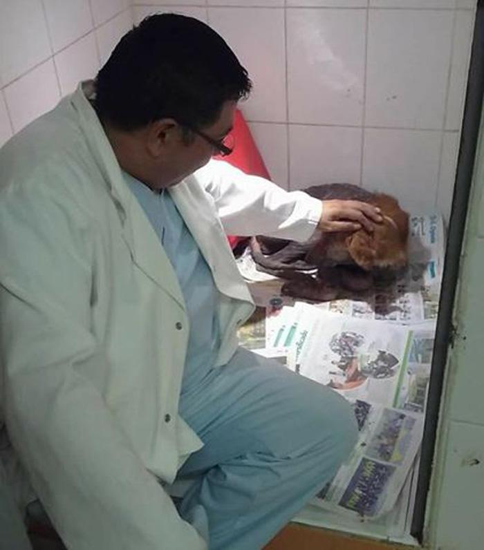 Sal recibe atención veterinaria