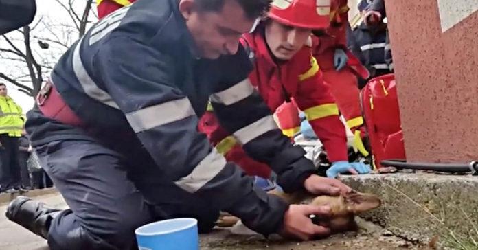 Un heroico bombero salvó la vida de un perro utilizando la técnica de RCP
