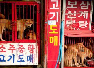 Uno de los mas grandes mercados de carne de perro en Corea va a cerrar
