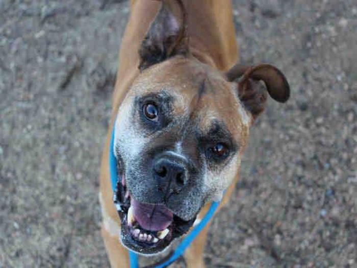 Willy, el último perro en ser adoptado