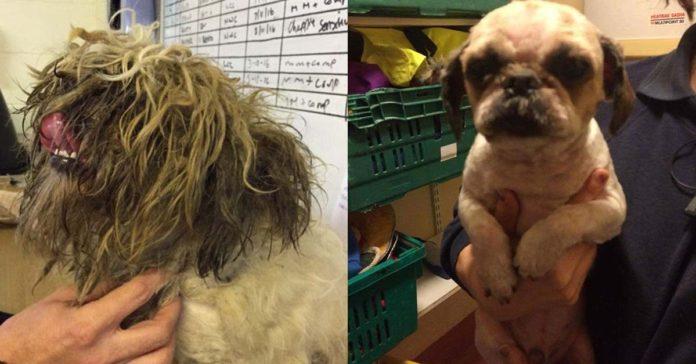 increíble transformación de un perro que tenía su pelo enmarañado