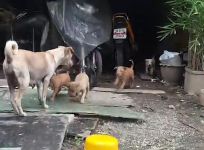 madre y sus cachorros