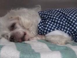 Perra está muy triste porque la familia la abandonó