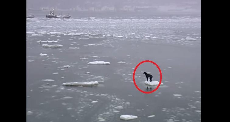 Perro en iceberg
