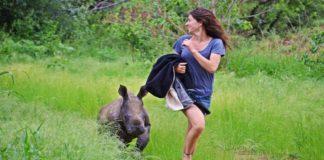 A este rinoceronte hembra le encanta estar al lado de su persona favorita