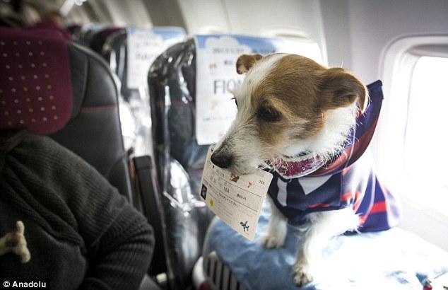 Aerolínea permite a los pasajeros viajar con sus perros