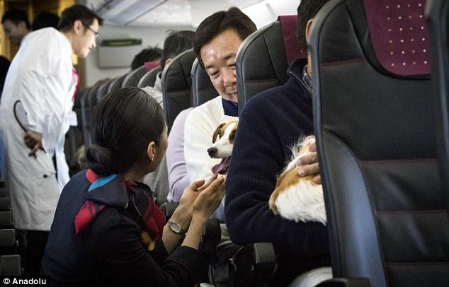Aerolínea permite viajar con perros