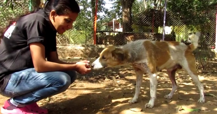 Asha es una perra muy adorable