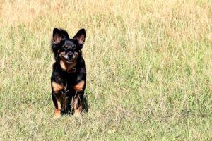 Ayude a mejorar el comportamiento de su perro