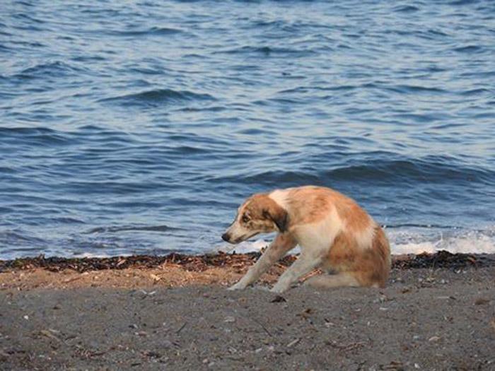 Blue se encontraba completamente solo en la playa