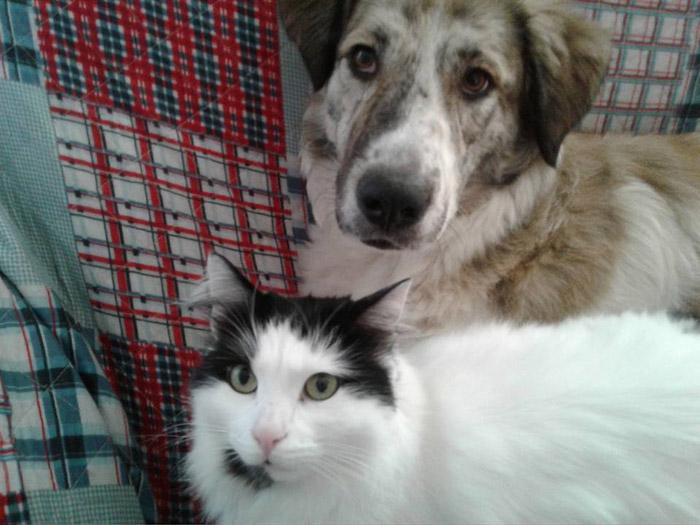 Blue y su amigo