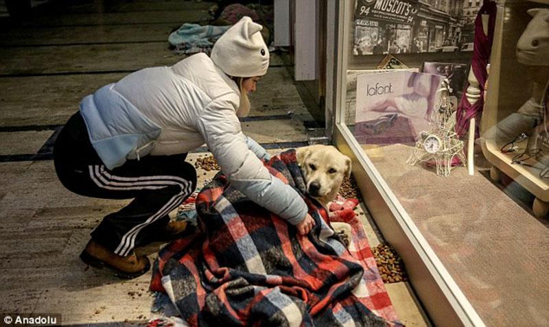 Brindan refugio a perros abandonados en las fuertes nevadas