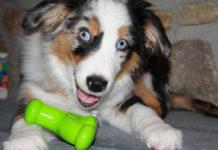 Calmar a un perro hiperactivo