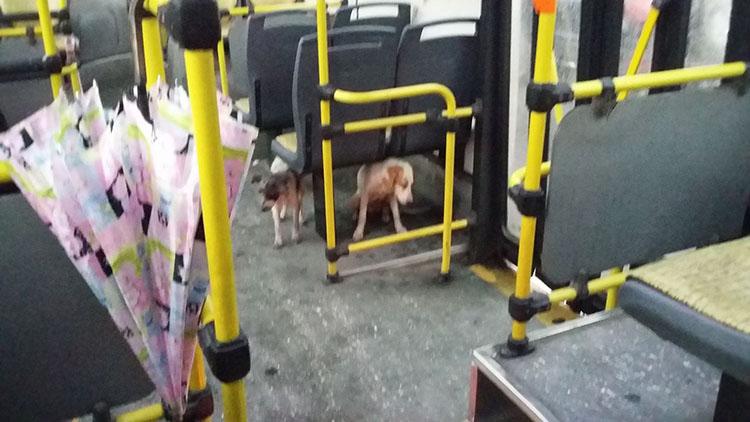 Conductor de autobús protege perros de tormenta