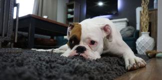 ¿Dejas a tu perro solo en casa? Aquí te explicamos algunos trucos y consejos