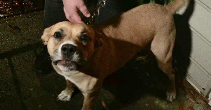 Esta heroica perra detectó una fuga de gas y salvó a su familia
