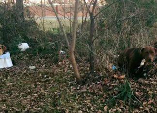 Esta perra cuidó a su amigo lesionado hasta que fueron rescatados