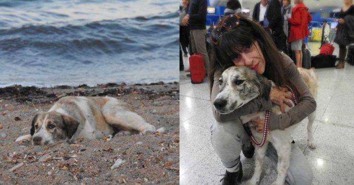 Esta perra estaba sola en la playa, pero ahora tiene un hogar para siempre