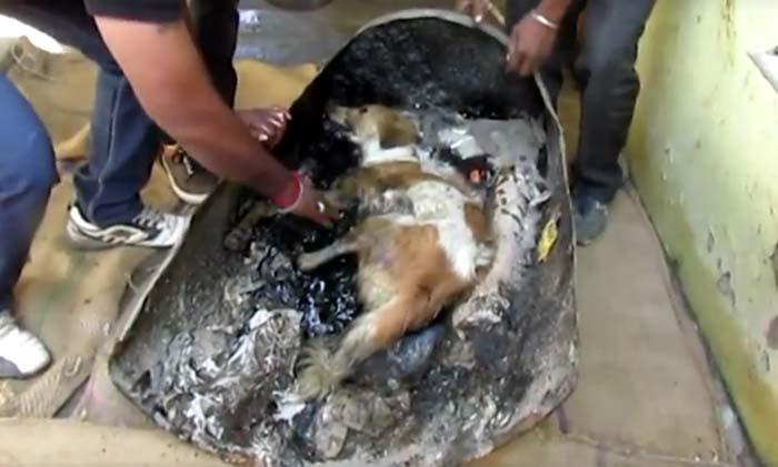 Esta perra quedó atrapada en un barril de alquitrán