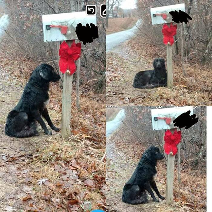 Questo cane è stato abbandonato in una cassetta postale