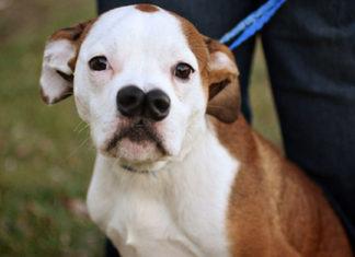 Este perro parece tener dos narices y fue abandonado por su familia