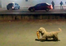 Este perro saqueador se ha vuelvo famoso por robar un paquete de papas